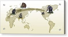 Mammoth Evolutionary Migration Acrylic Print by Spl