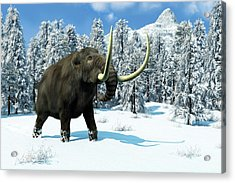Mammoth Acrylic Print by Roger Harris
