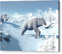Mammoths Walking Slowly On The Snowy Acrylic Print