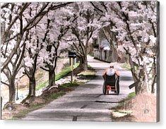 Man In Wheelchair Under Cherry Blossoms Acrylic Print by Dan Friend