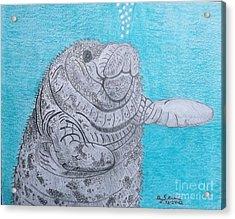 Manatee Close Encounter Acrylic Print