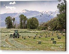 Mancos Colorado Landscape Acrylic Print