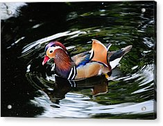 Mandarin Duck Acrylic Print by Bonnie Fink