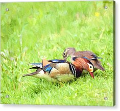 Mandarin Duck Couple Acrylic Print