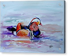 Mandarin Duck Acrylic Print by Isabel Salvador