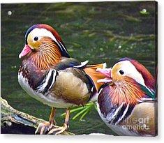 Mandarin Ducks Acrylic Print by Eve Spring