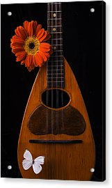 Mandolin With White Butterly Acrylic Print by Garry Gay
