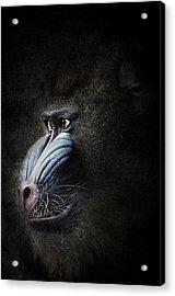 Mandrill Portrait Acrylic Print