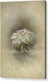 Acrylic Print featuring the photograph Mandy by Elaine Teague