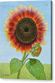Mandy's Magnificent Sunflower Acrylic Print