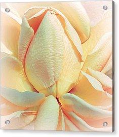 Mango Smoothie Acrylic Print by Darlene Kwiatkowski