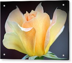 Acrylic Print featuring the photograph Mango's Dance by The Art Of Marilyn Ridoutt-Greene