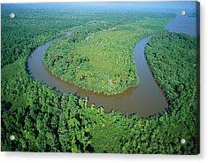Mangrove Forest In Mahakam Delta Acrylic Print