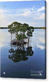 Mangrove Island Acrylic Print by Andres LaBrada