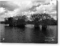 Mangrove Islands Acrylic Print by Andres LaBrada
