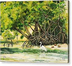 Mangrove Morning Acrylic Print