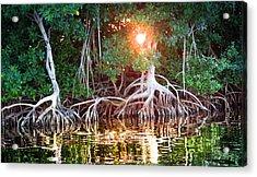 Mangrove Sunset Acrylic Print