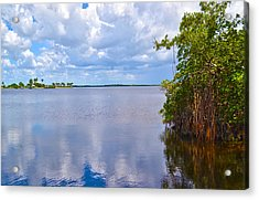 Acrylic Print featuring the photograph Mangroves In Matlacha Florida by Timothy Lowry