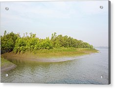 Mangroves In The Sunderbans Acrylic Print by Ashley Cooper