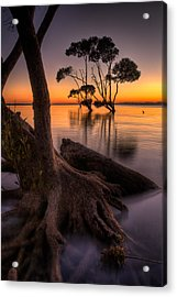 Mangroves Of Beachmere Acrylic Print