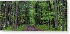Manistee National Forest Michigan Acrylic Print by Steve Gadomski
