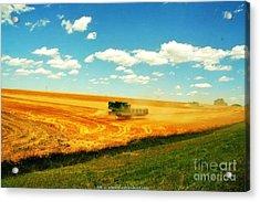 Mankato Nebraska Wheat Harvest Acrylic Print by PainterArtist FIN