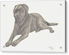 Acrylic Print featuring the drawing Man's Best Friend by Patricia Hiltz