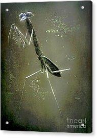 Mantis II Acrylic Print by Arne Hansen
