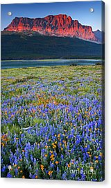 Many Glacier Morning  Acrylic Print by Aaron Whittemore