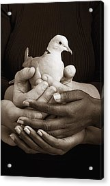 Many Hands Holding A Dove Acrylic Print by Ron Nickel