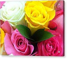 Many Roses Acrylic Print by Alohi Fujimoto