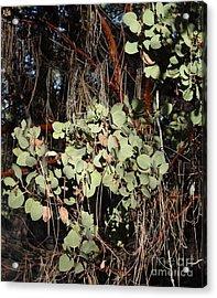 Manzanita Acrylic Print