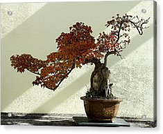 Maple Bonsai Acrylic Print