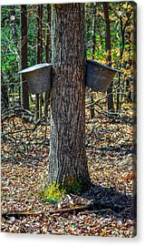 Maple Bucket Tap Acrylic Print by Brian Stevens