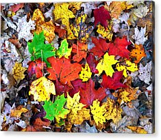 Acrylic Print featuring the photograph Maple Carpet by Jackie Carpenter