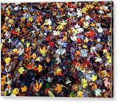 Acrylic Print featuring the photograph Maple Chaos by Wayne King