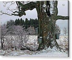 Maple Days Acrylic Print