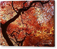 Maple In Fall Acrylic Print