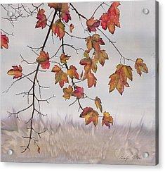 Maple In Gray Sky Acrylic Print by Carolyn Doe