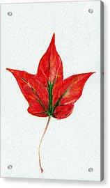 Maple Leaf Acrylic Print by Anastasiya Malakhova