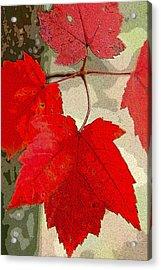 Maple Leaf Display Acrylic Print