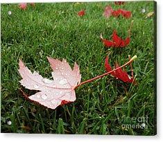 Maple Leaf In Canada Acrylic Print