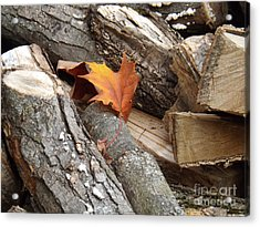 Maple Leaf In Wood Pile Acrylic Print