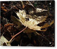 Acrylic Print featuring the photograph Maple Leaf by J L Zarek