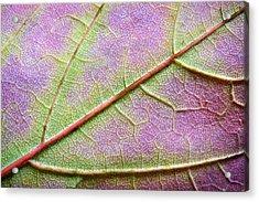 Maple Leaf Macro Acrylic Print by Adam Romanowicz