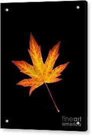 Maple Leaf On Black Acrylic Print