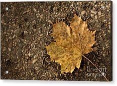 Maple Leaf On The Ground Acrylic Print by Jolanta Meskauskiene