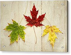 Maple Leave Acrylic Print by Isabel Poulin