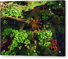 Maple Leaves And Watercress Acrylic Print by Robin Street-Morris