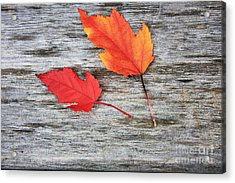 Acrylic Print featuring the photograph Maple Leaves by Gerry Bates